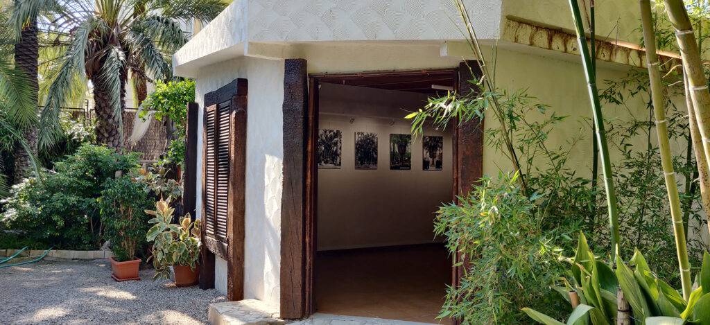 The Huerto del Cura orchard installs a photographic exhibition with the Imperial Palm tree